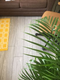 rug_plant_floor